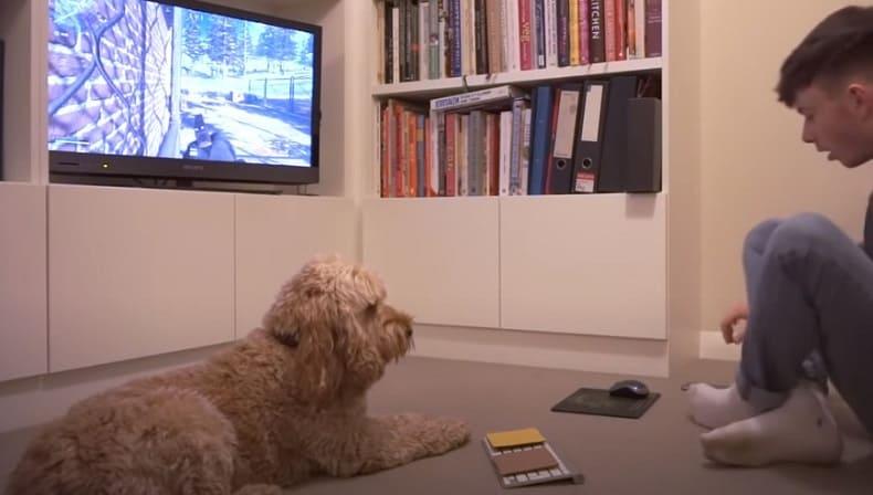 Блогер научил играть собаку