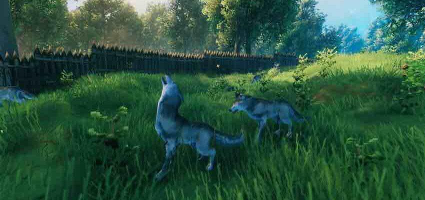 Как приручать волка в Valheim?